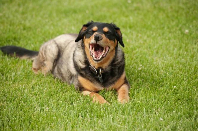 pas u travi