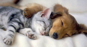 cat-and-dog-cuddling1