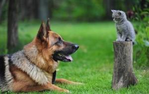 macka i pas2_1